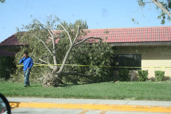 Damage From Santa Ana Winds: October 22, 2007