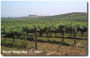 A Temecula Vineyard near Lake Skinner